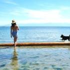 cachorro-na-praia
