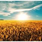 beneficios-por-consumir-cereais