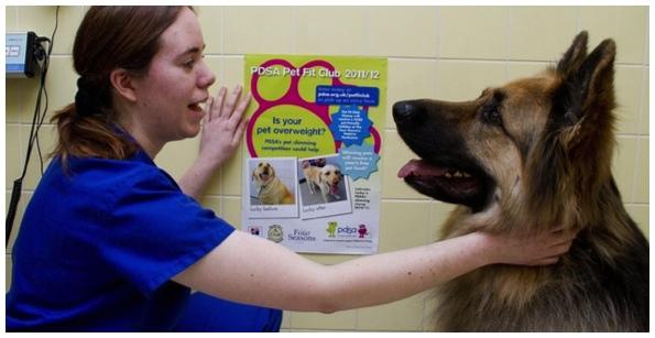 clinicas-veterinaria-em-sao-paulo
