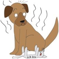como banhar cachorros