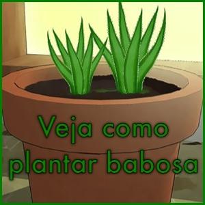 como-plantar-babosa