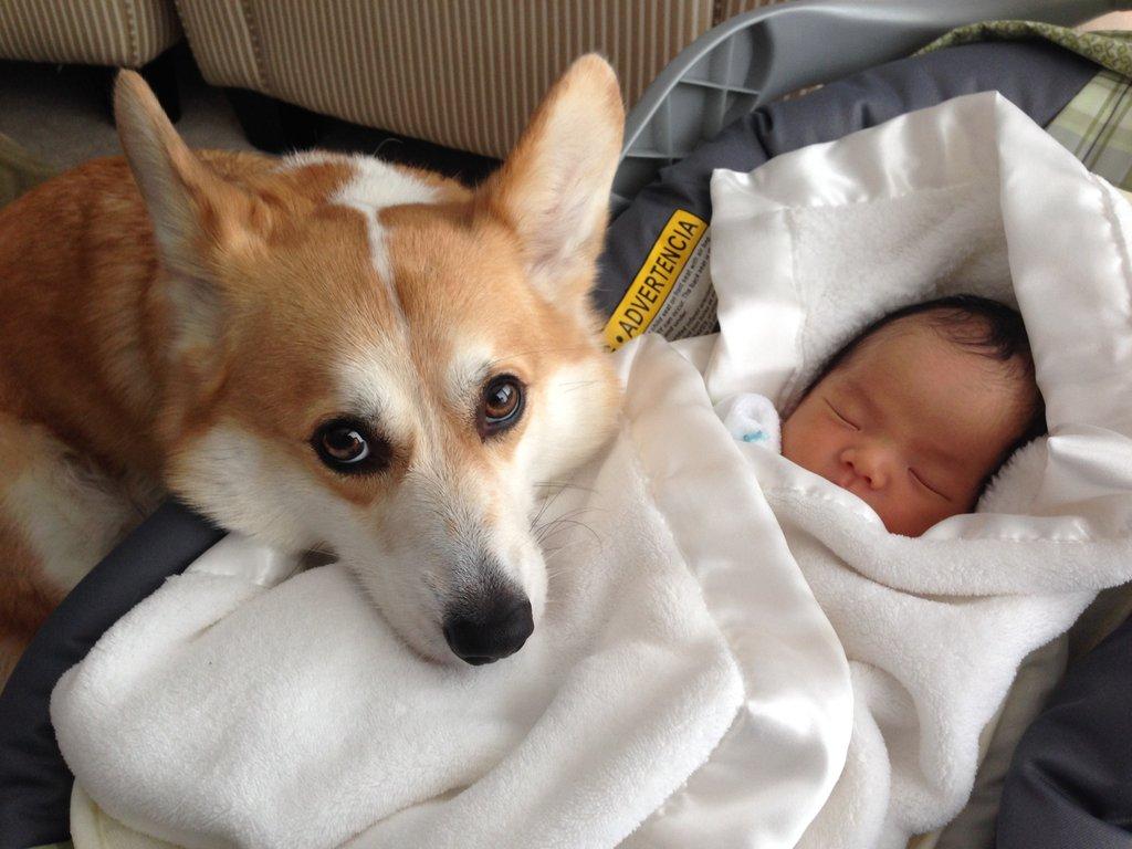 cão e bebê juntos