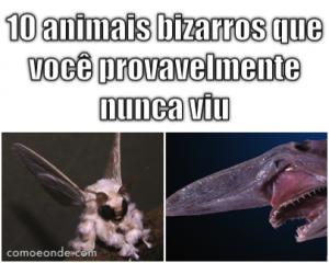 10 animais pra lá de bizarros