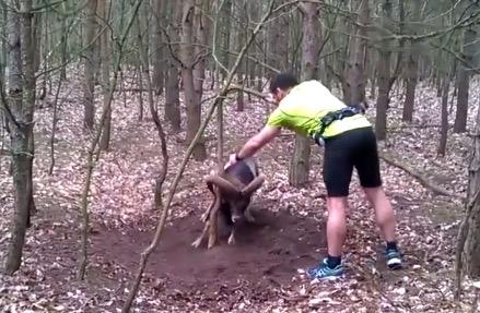 homem salva animal